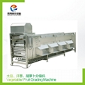 Vegetable Fruit Grading Machine