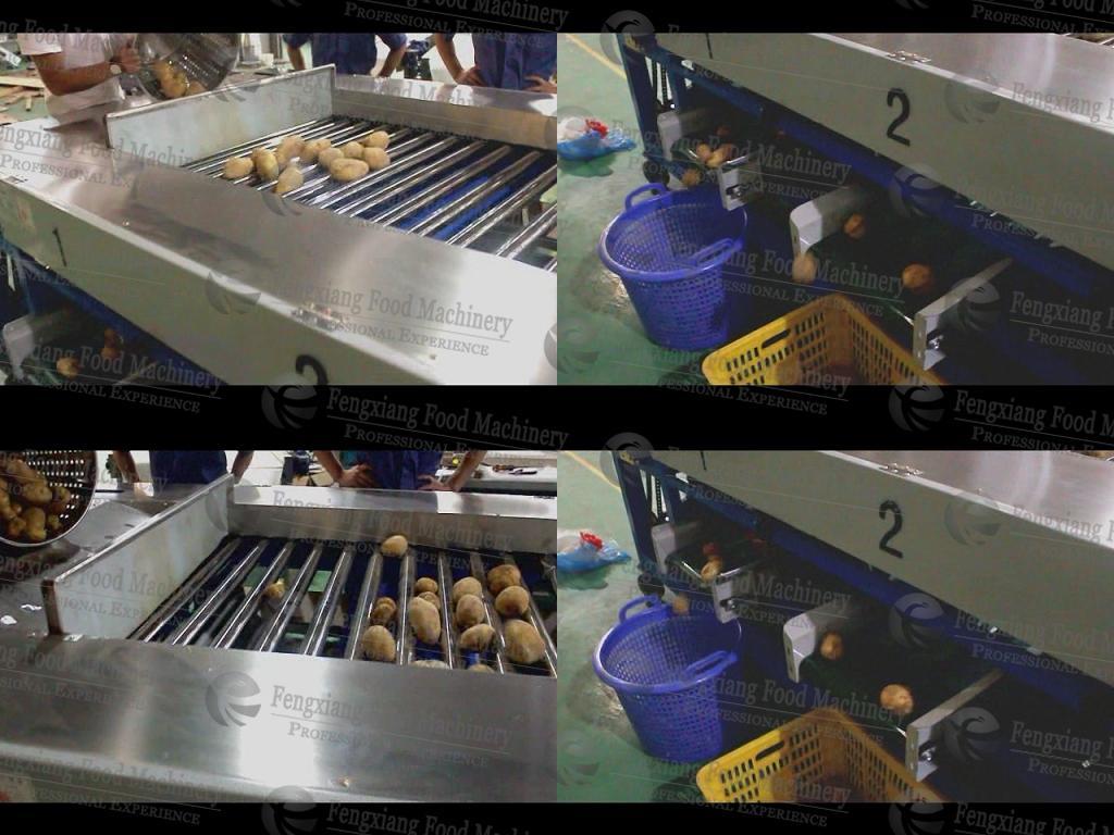 凤翔HFM-1 红薯分级机 蔬果分选机 2