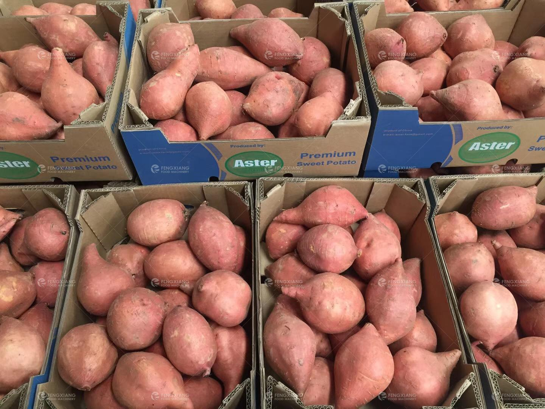 凤翔HFM-1 红薯分级机 蔬果分选机 4
