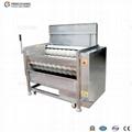 MSTP-500 Fresh Ginger Washer & Peeler 1