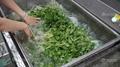 WASC-10 小型果蔬清洗消毒機   4