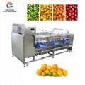 Vegetable Sorting Machine Sorter Fruit