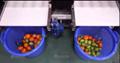 Vegetable Sorting Machine Sorter Fruit Sorting Grading Machine