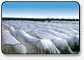 農用、園藝用無紡布(大棚、地膜)