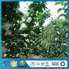 High Quality Fruit Bag Fruit Insect-Resistant Bags Uv Resistance Gardening Plant
