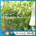 定制无纺布水果套袋 厂家批发防虫防鸟拉绳袋 水果保护膜 4
