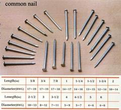 commom nails