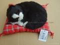 sleeping  cat 4