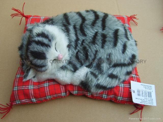 sleeping  cat 5