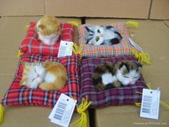 套四睡垫小猫