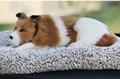 syntheic fur animal  sleeping dog 9
