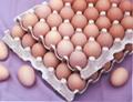 Hen Eggs 1