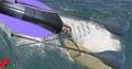 冲浪船桨 1
