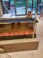 元朗 爾巒三面观火电子壁炉案例