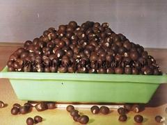 文冠果种子