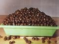 文冠果种子苗木 4