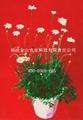 除虫菊 5