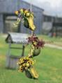 polyresin/resin turtle garden flower