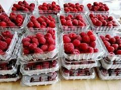 樹莓品種介紹
