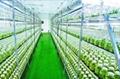 PGE使城市农业成为有发展前途的现代农业