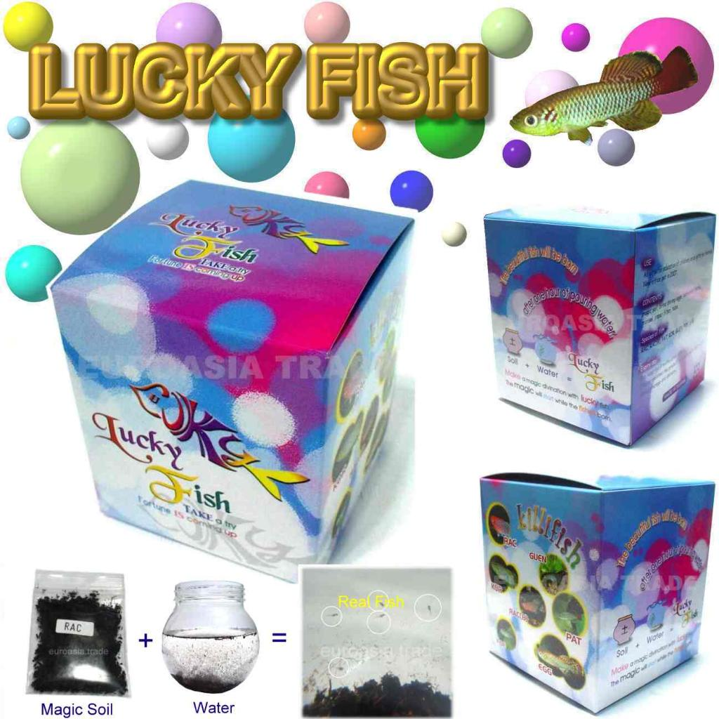 Lucky fish taiwan manufacturer magic fish i q for The magic fish