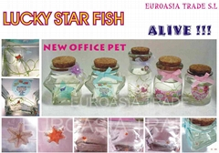 Lucky Star Fish