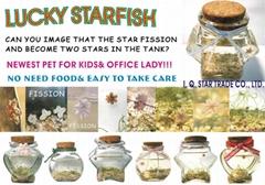 Lucky Starfish