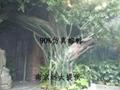 水泥仿真树 5