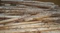木材剥皮机 5