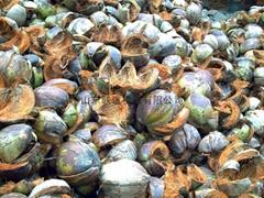 棕櫚果殼切碎機