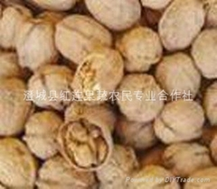 Selling large numbers of Shaanxi walnut