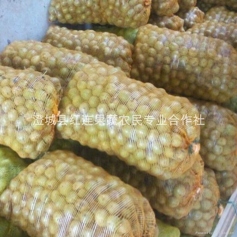 Selling large numbers of Shaanxi walnut 3