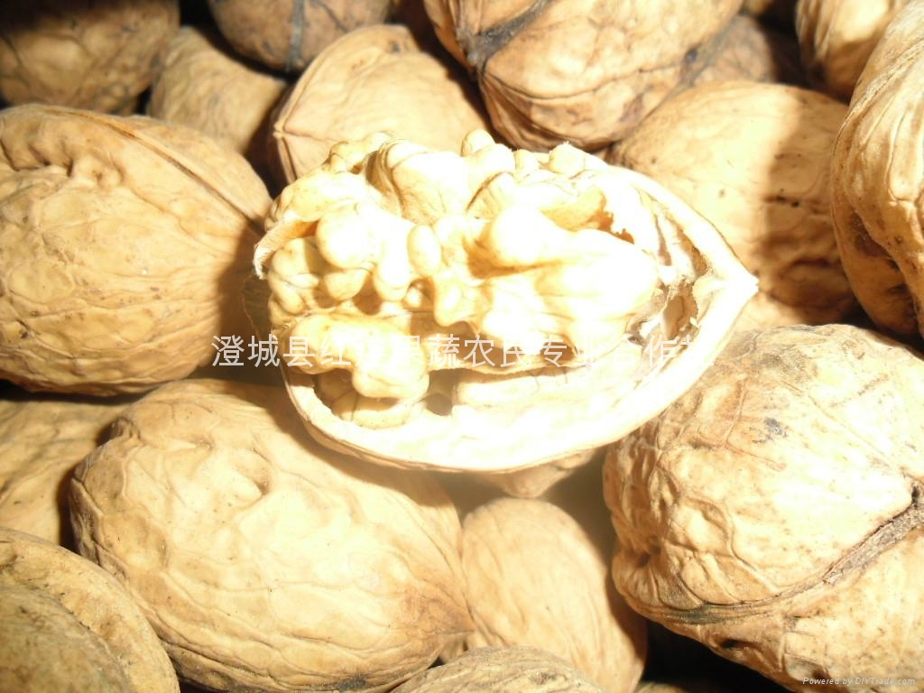 Selling large numbers of Shaanxi walnut 4