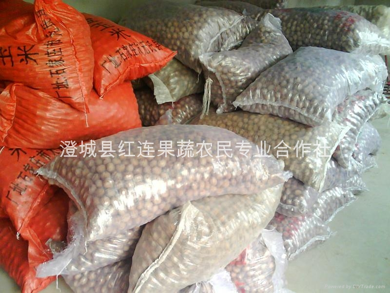 Selling large numbers of Shaanxi walnut 5