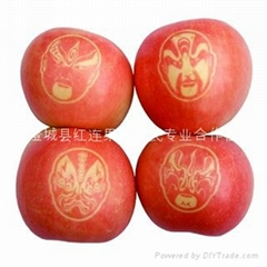 Shaanxi lettering large supply Fuji apple