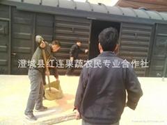 Large supply of Shaanxi yellow corn