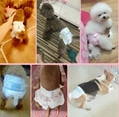 Disposable Physiological Shorts For Pet Dog Sanitary Cotton Nappy Shorts Diapers