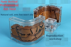 Ant House Fill Clay Sand Ants Farm Insect Nest Ecology Mania Home Villa