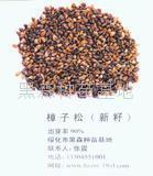 杨树苗 2