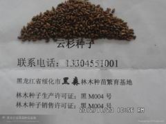 綏化市黑森林木種苗繁育基地