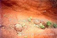 Indian Iron ore Fe 58 gr