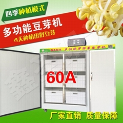 Soybean sprout machine equipment with yellow green bean sprout