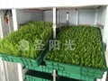 Large bean sprouts production machine to green sprouts machine 3