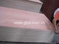 Bintangor Faced Poplar Core Plywood
