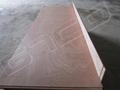 Sapeli Door Skin Plywood
