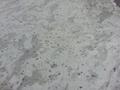 Elegant Andromeda white granite