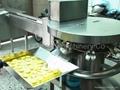 最新機種全自動打蛋分蛋機含嗅氧殺菌系統