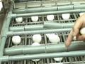 自動熟雞蛋脫殼機