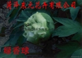 Peony flowers - green incense ball