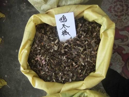 雞爪槭小苗 2